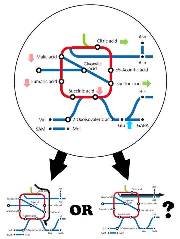 安定同位体のメタボロミクス